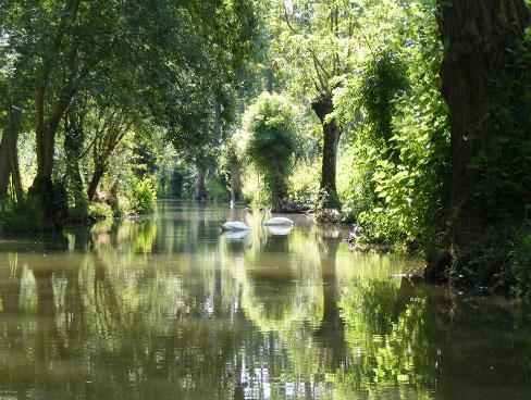 Image of swans - Marais Poitevin - Poitou Charentes