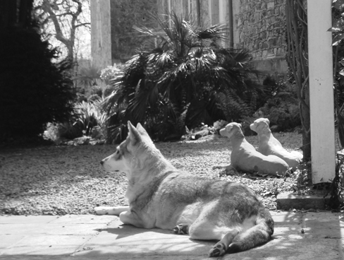 Dogs lazing on the grounds of a Chateau in Normandy