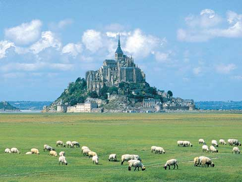 Sheep grazing the pastures near Mont St Michel