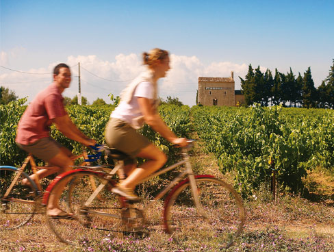 Cycling in the Provence vineyards